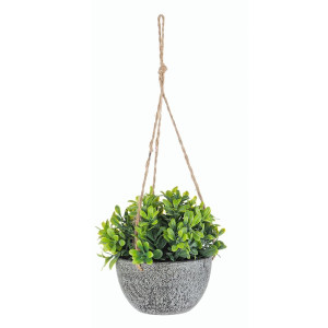 Floare suculenta in ghiveci suspendabil Ø10.5x13h