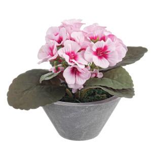 Viorele in ghiveci roz Ø11.5 cm x 13h