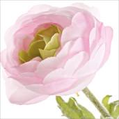 Ranunculus artificial 3 flori roz pudrat 60h