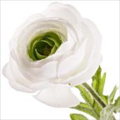 Ranunculus artificial 3 flori albe 60h